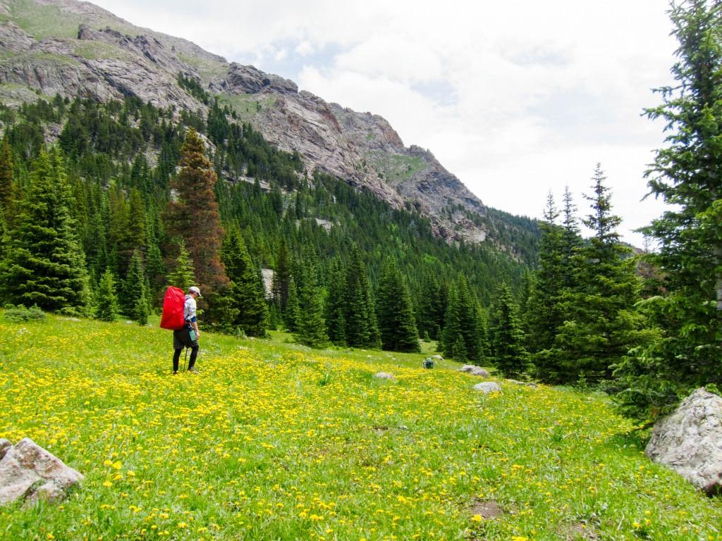Eric hiking through wildflowers